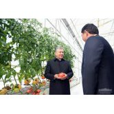 Exports from a modern greenhouse amounted to $480 thousand